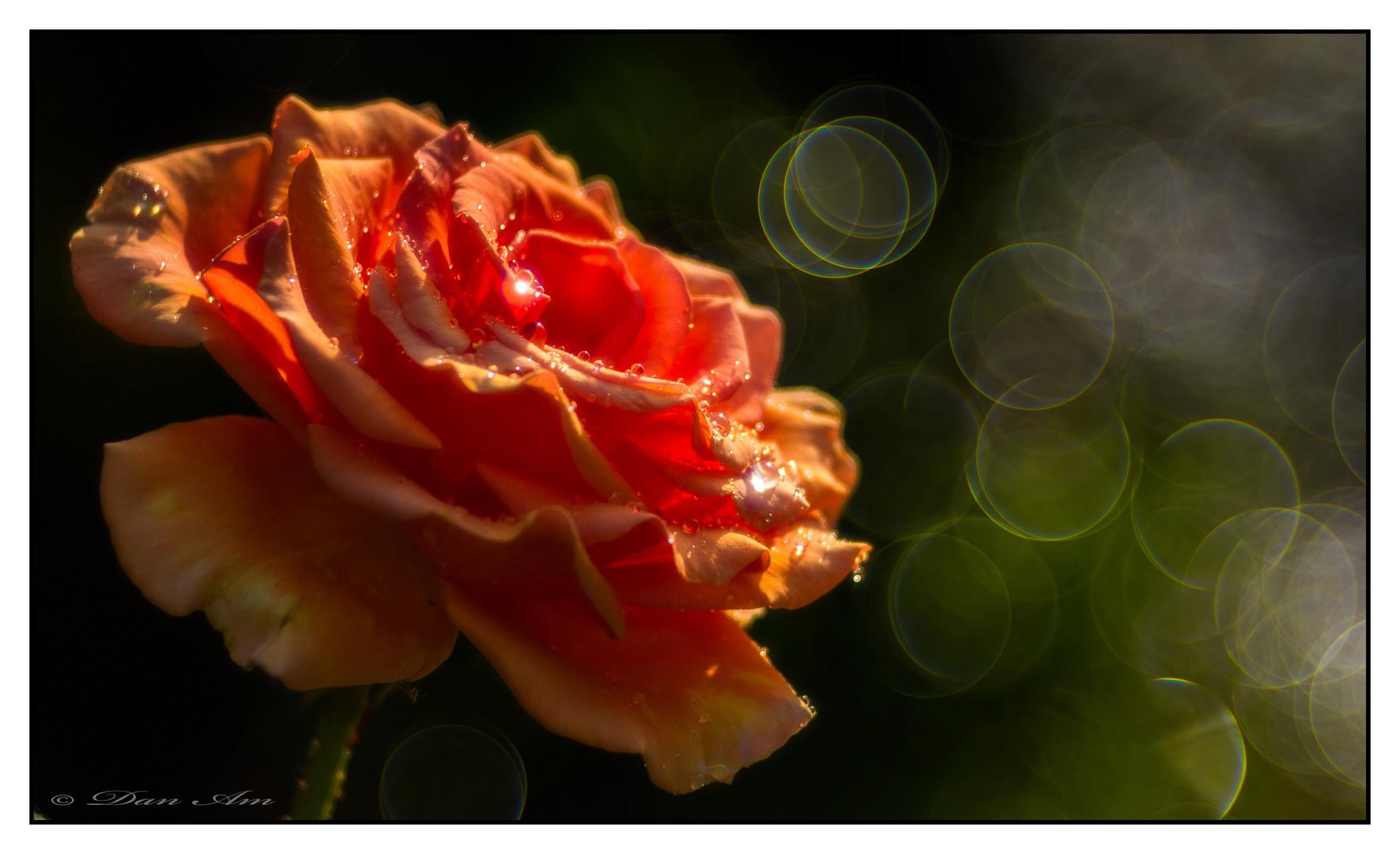 I never promised you a rose garden foto bild canon - Never promised you a rose garden ...