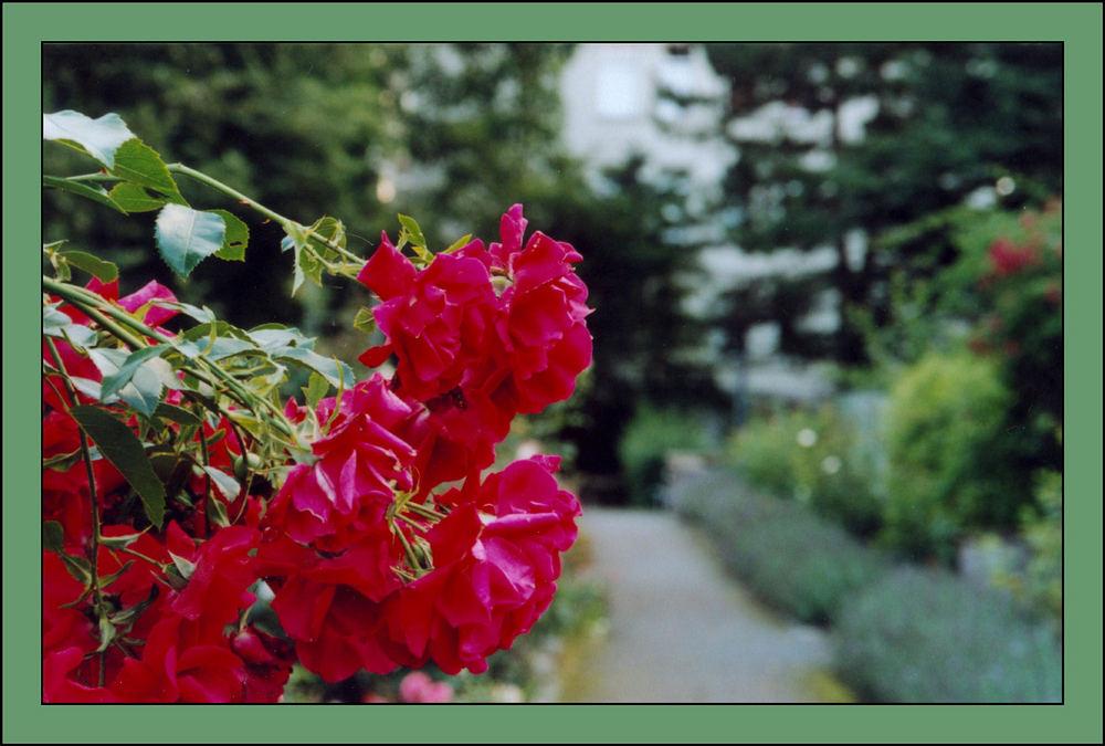 I never promised you a rosegarden...