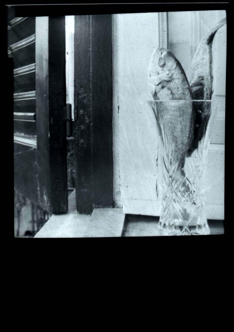 i pesci nel foro