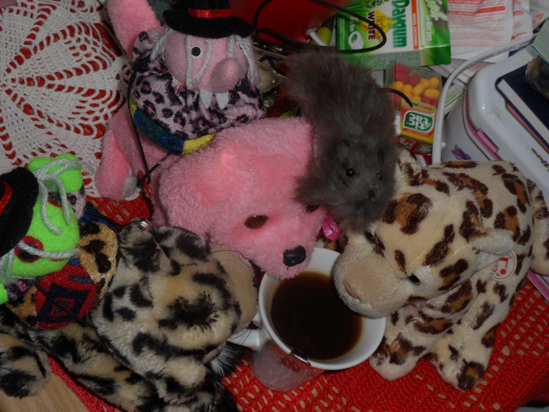 I piccoli peluche servono sempre il caffè al mattino