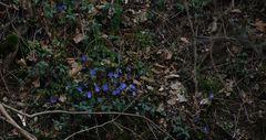 I primi fiori della primavera........