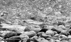 I sassi bagnati dal mare....