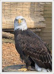 I see you too! V oder wer wird Deutscher Eishockeymeister? Die Adler sind's!