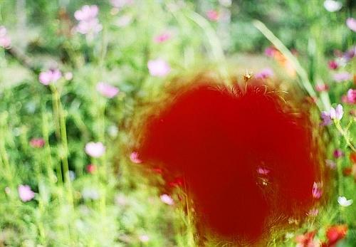 I shot the poppy...