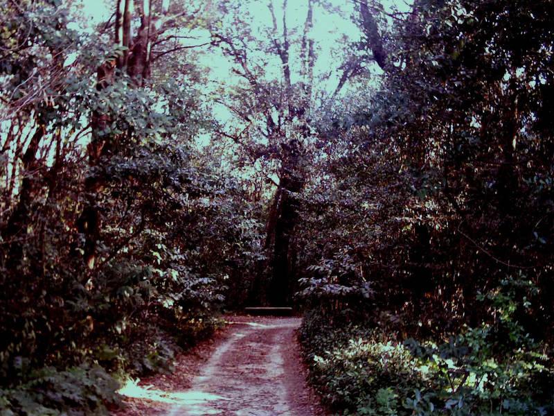 i suoni degli alberi