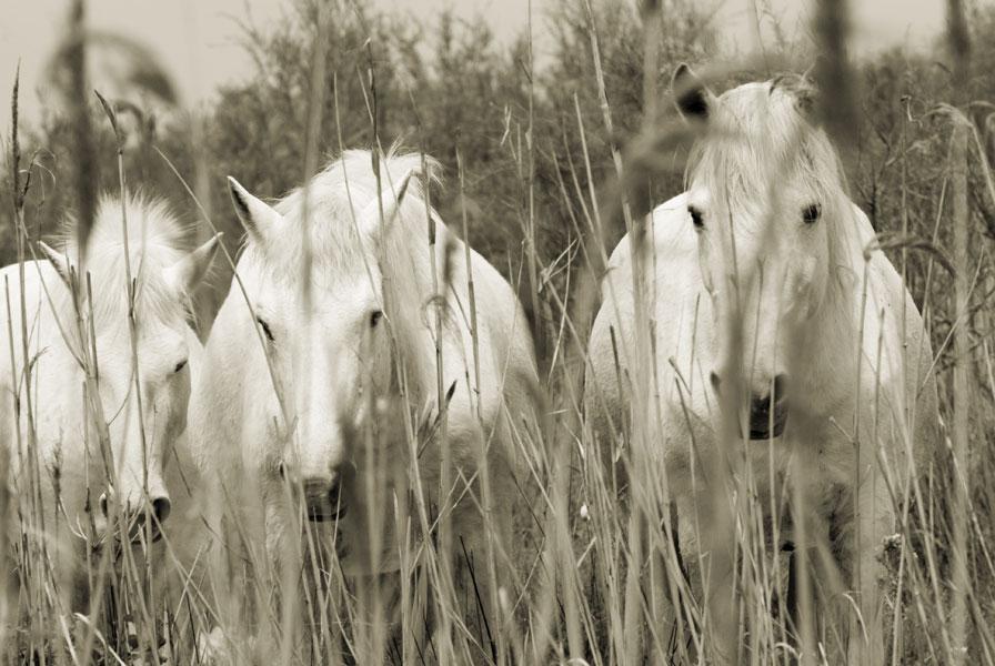 i tre cavalli