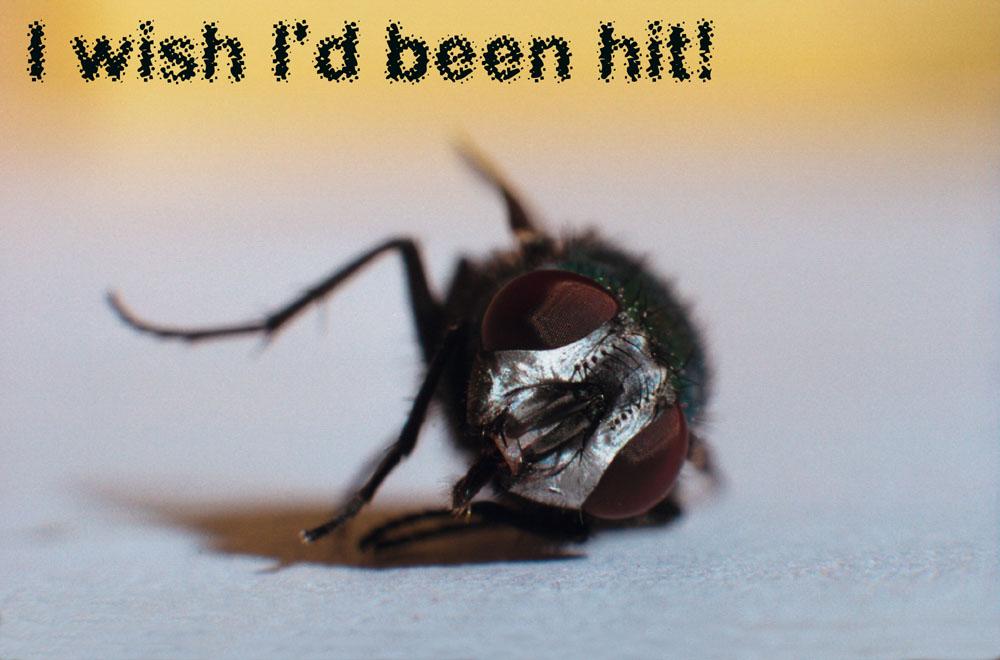 I wish i´d been hit