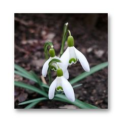 I wish my fc friends and buddies a fine first day of spring.. and happy weekend ...