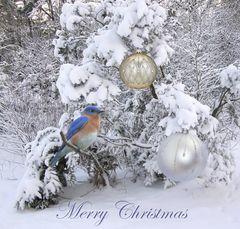 I wish the FC Family a Wonderful Christmas Celebration