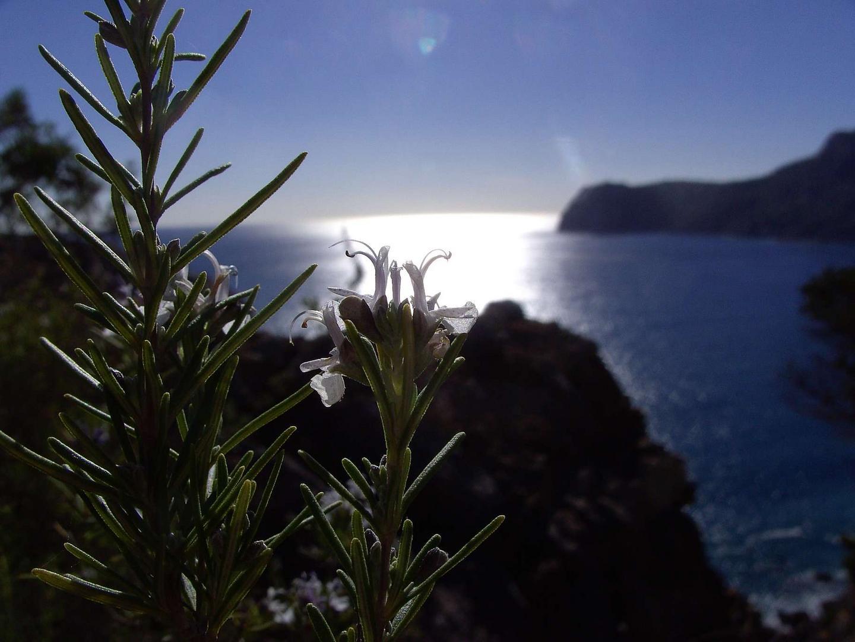 Ibiza, Es Cubells, Vista al Cabo Llentrissa