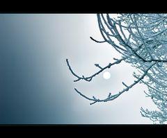 ~ Ice Age VII ~