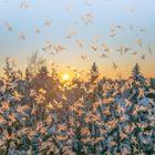 Ice butterflies