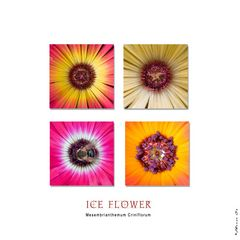 Ice Flower • 2