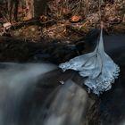 Ice Mistletoe