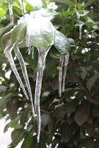 Ice Moskito (?)
