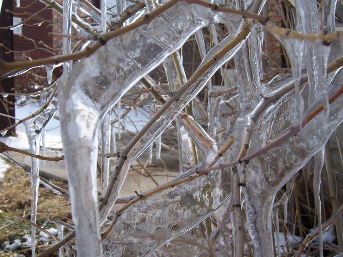 Ice Study