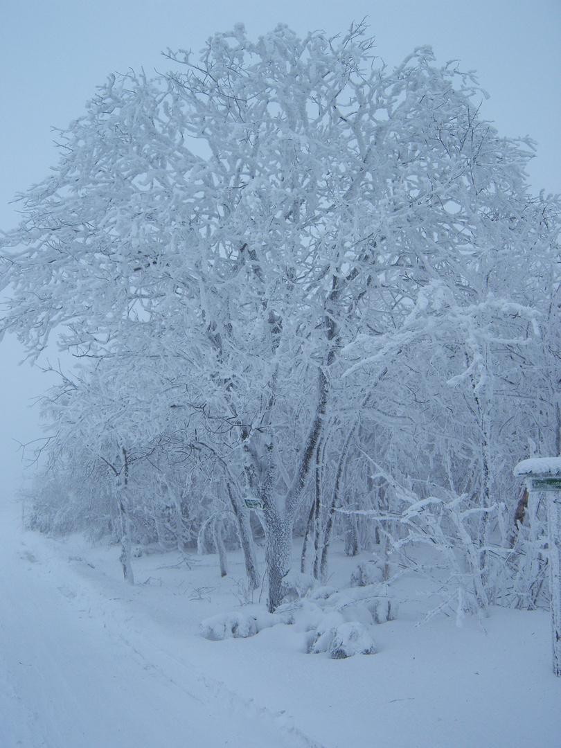Iceage Zinnwald