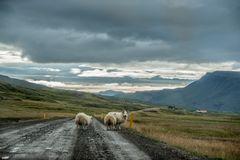 Iceland Highway :)