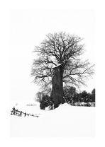 Icey Tree(s)
