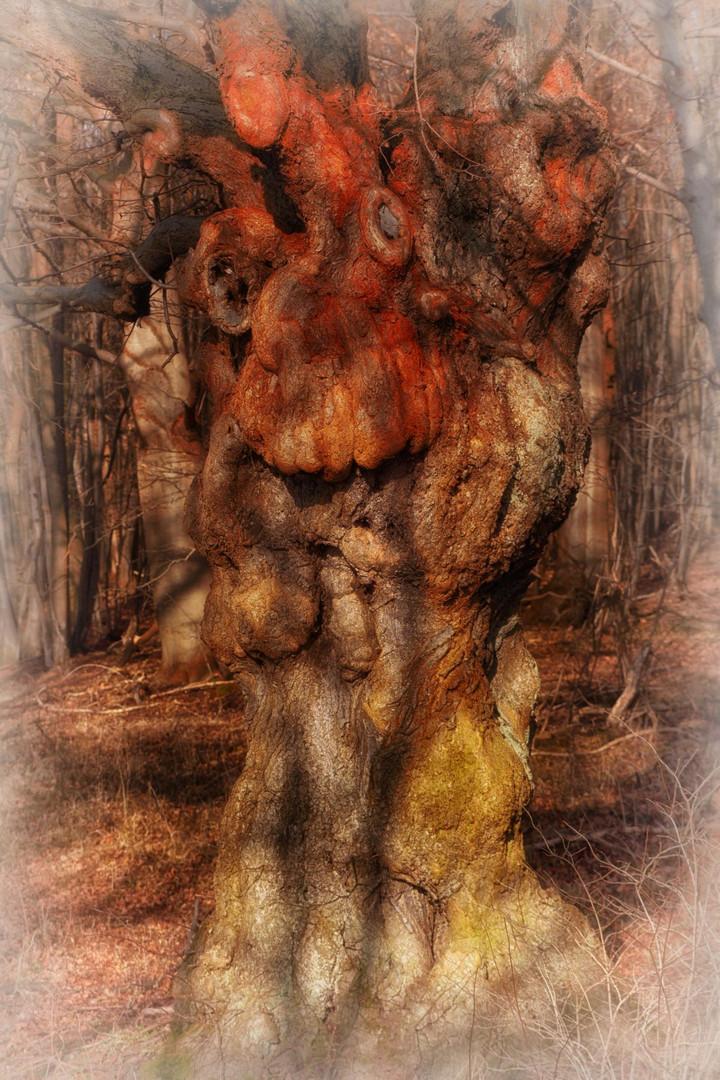 Ich alter Baum habe alles im Blick.....