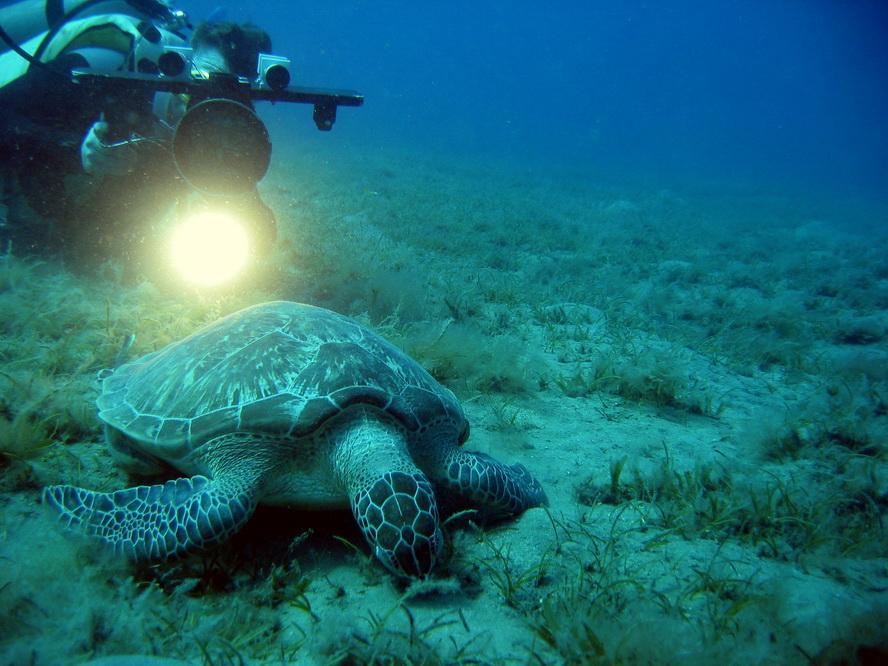 Ich beim Filmen im Roten Meer