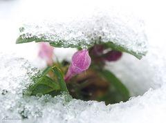 Ich bin der kleine Frühling.....