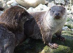 Ich bin der Otter uns wer bist Du ?