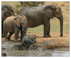 Ich bin doch nur ein kleiner Elefant - holt mich hier raus!