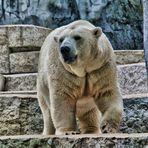 ich bin ein bär, holt mich hier raus...!!!
