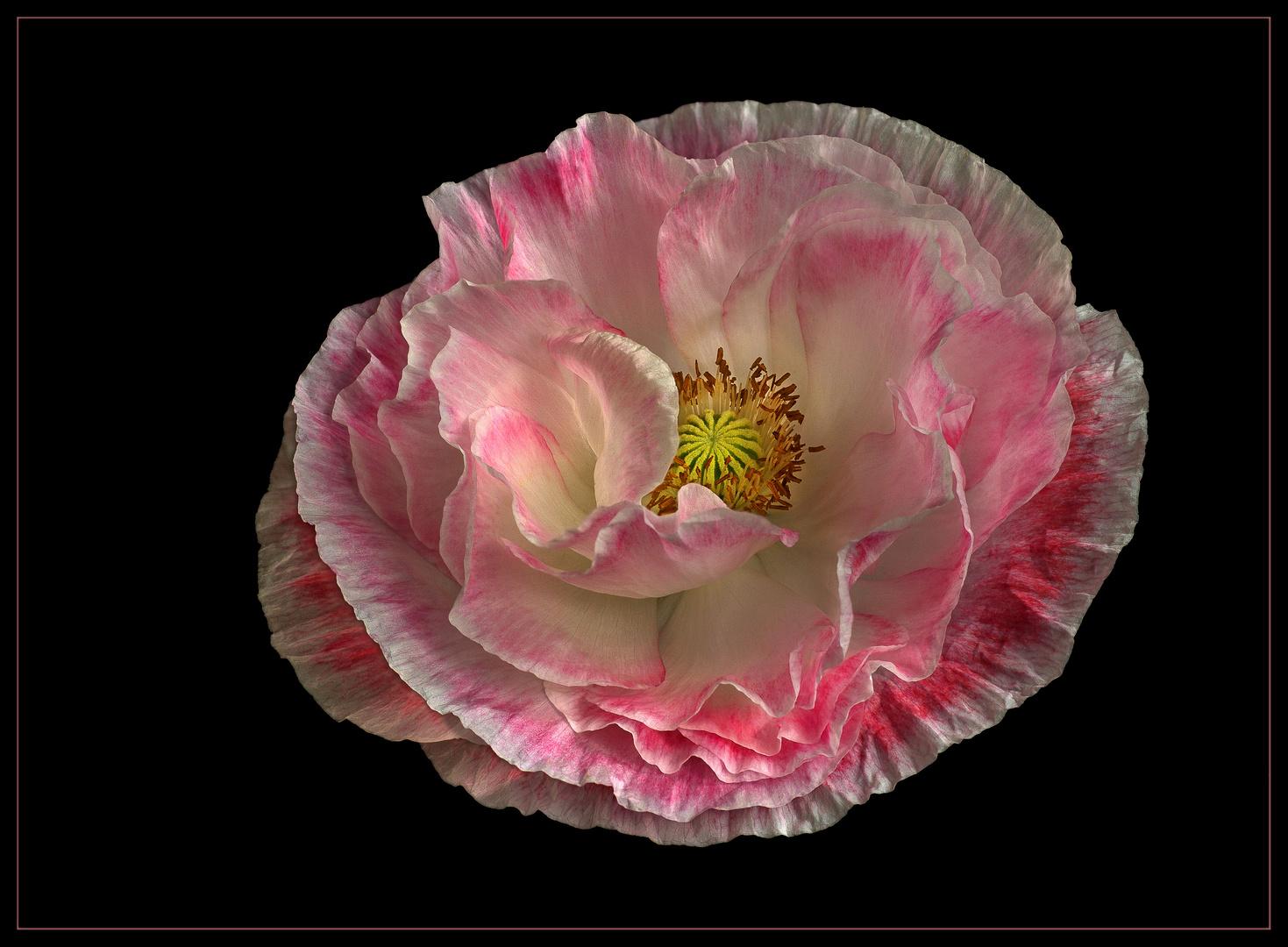 Ich bin ein Blumenkind aus der Saatmischung - Falling in Love