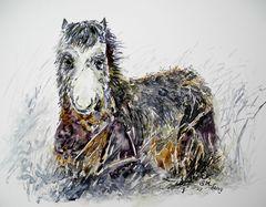Ich bin ein Carneddau Pony :-)