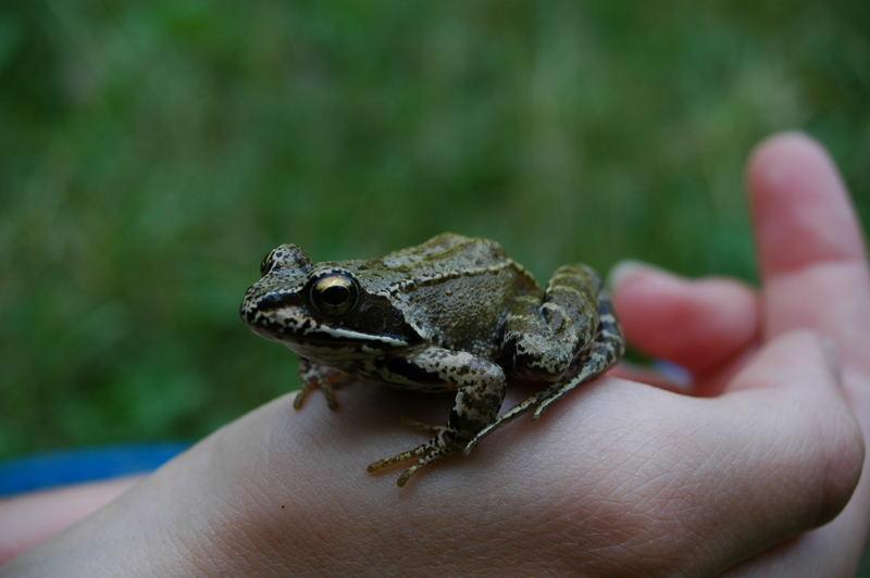 ich bin ein froschkönig