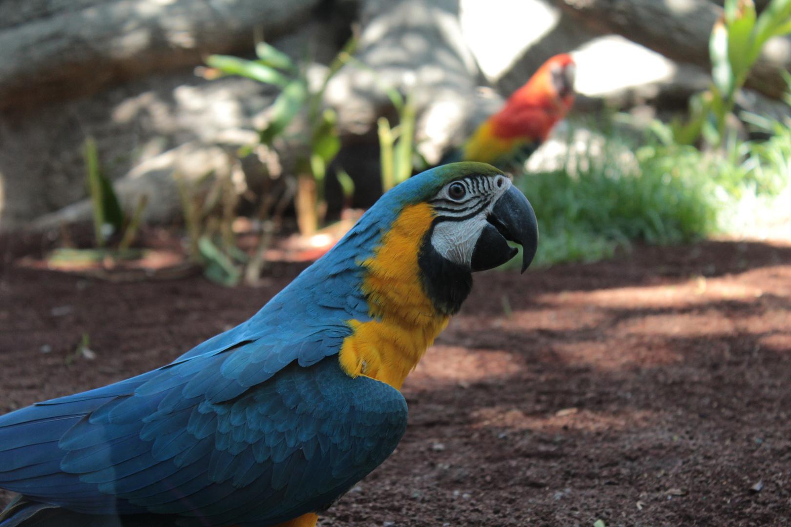 Ich bin ein Papagei und Fotogen