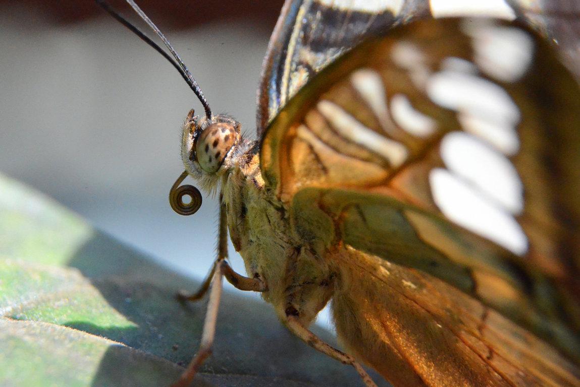 Ich bin ein Schmetterling...