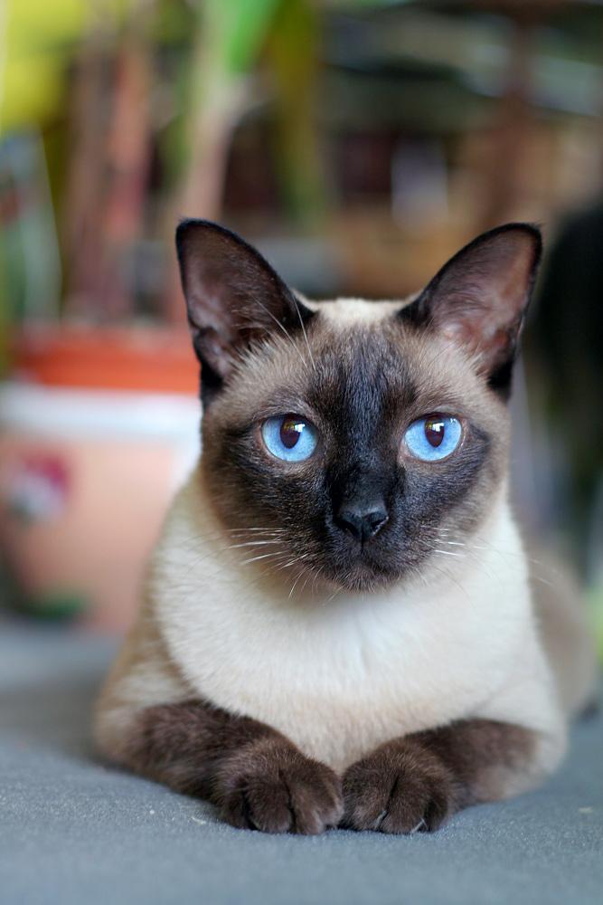** Ich bin eine ganz hübsche Katze **