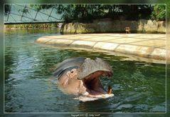 Ich bin eine Hippo