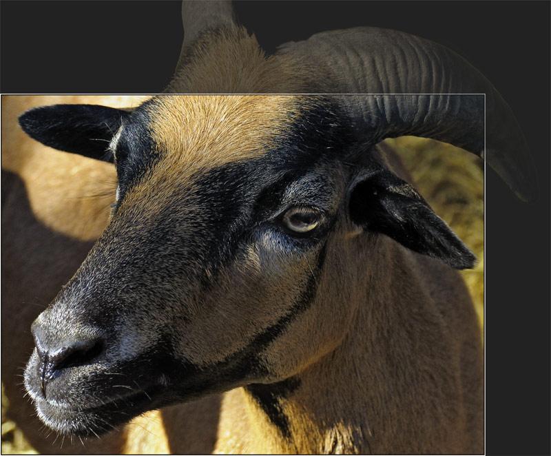 ich bin eine Ziege und weiß nicht, wie ich heiße ;-))