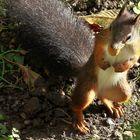 Ich bin Fritz, das Eichhörnchen.
