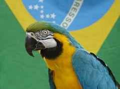 Ich bin ganz klar für Brasilien!