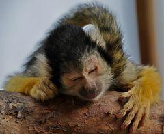 Ich bin ja sooooooooo müde!