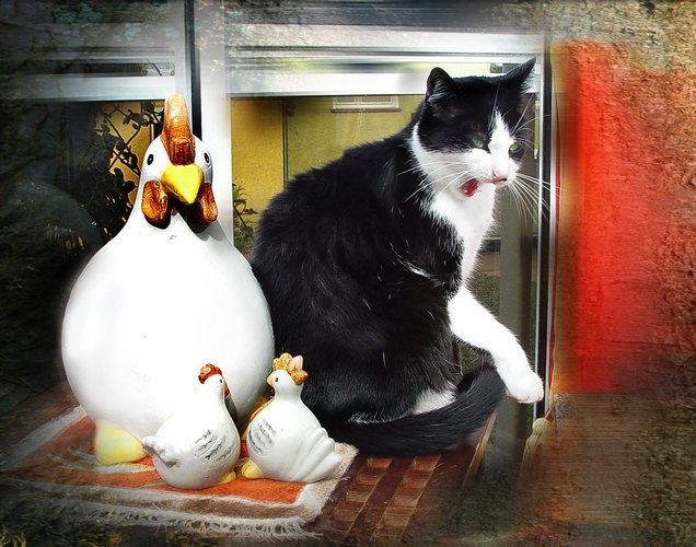 Ich bin kein Huhn ... !!!