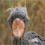 Ich bin kein komischer Vogel ...