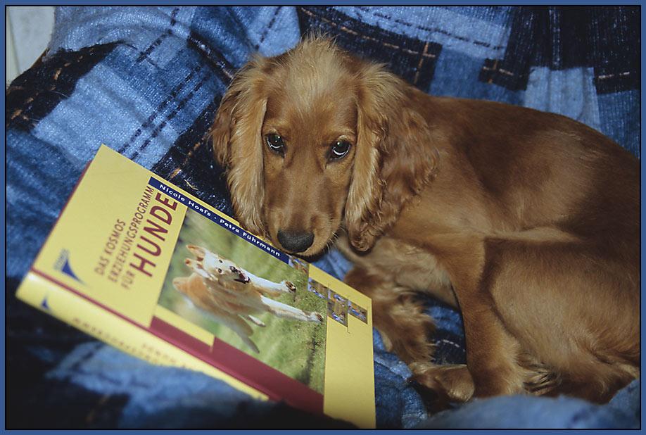 Ich bin Lesemuffel! Mein Hund macht Selbststudium! ;-)