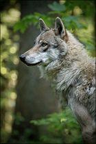 Ich bin Mr. Wolf, ich löse Probleme