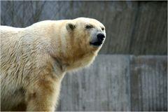 Ich bin nicht Knut....