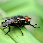 Ich bin nur eine einfache Fliege.....