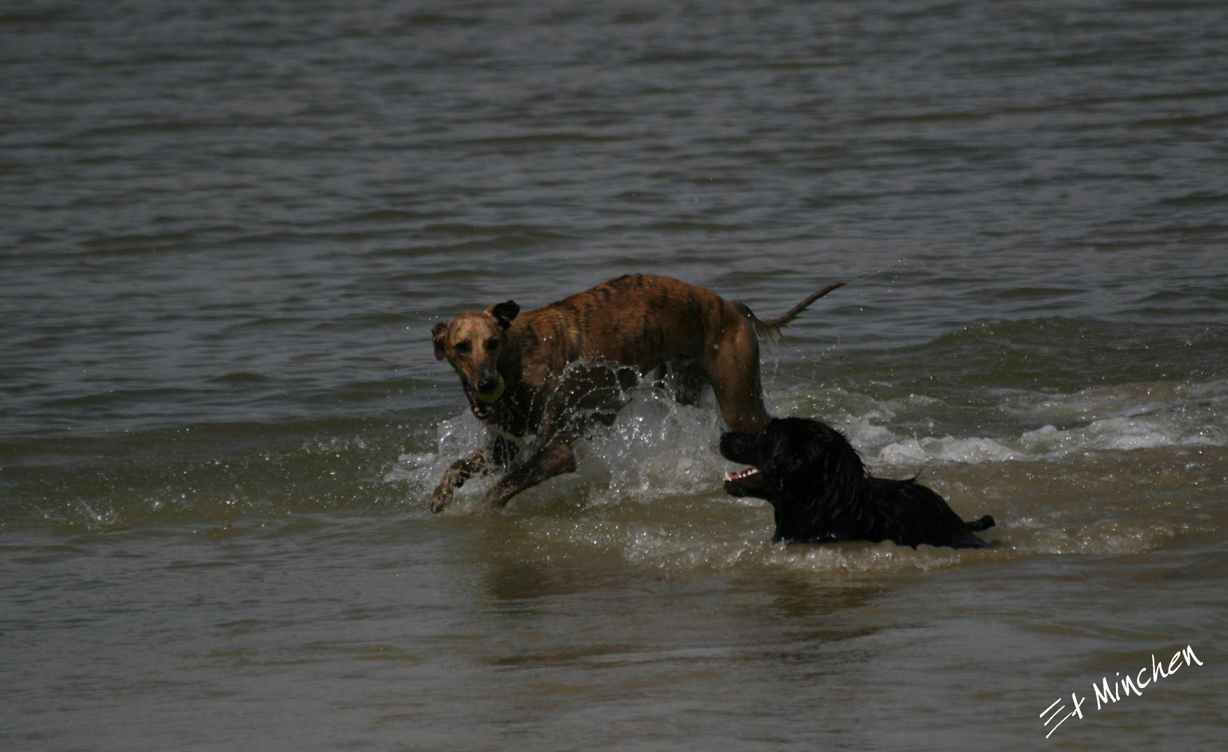 Ich bin schneller... auch im Wasser:-)