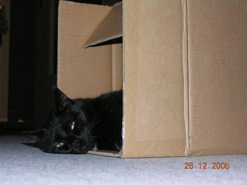 ... ich bin schon wieder müde - diesmal schlafe ich in diesem Karton
