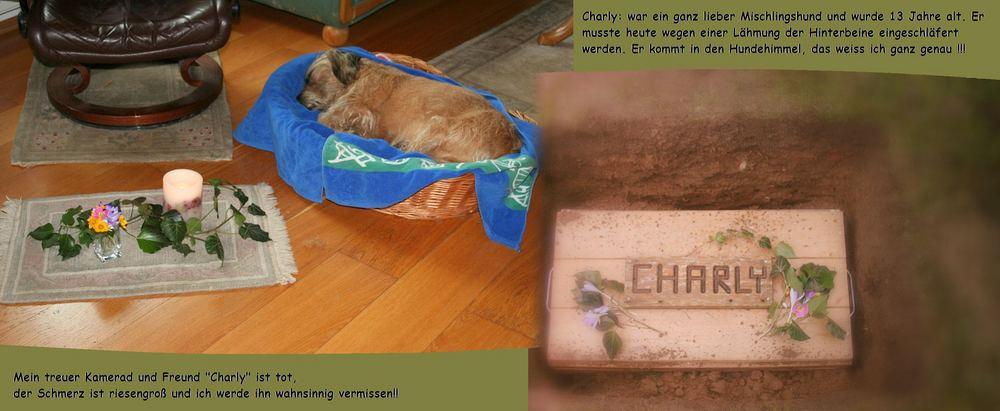 Ich bin so traurig, mein lieber Hund CHARLY ist tot