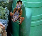 Ich dacht ich seh nicht richtig Frosch 1